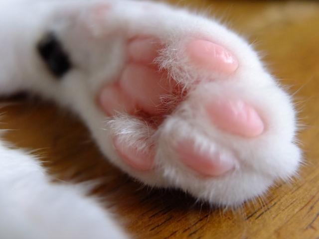 いつでも一緒!猫モチーフ雑貨で猫好き仲間と会話がはずむ小物5選